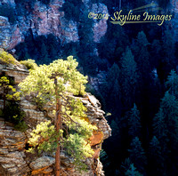 Backlight, Mogollon Rim AZ