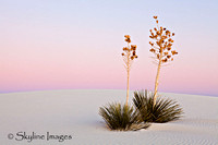 White Sands, NM.